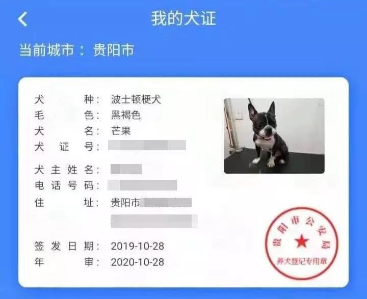 """贵阳可给狗狗办""""身份证""""啦 还可通过APP寻狗!"""