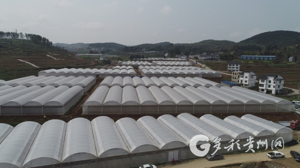 开阳县:坝区产业为群众带来持续增收 三农 第3张