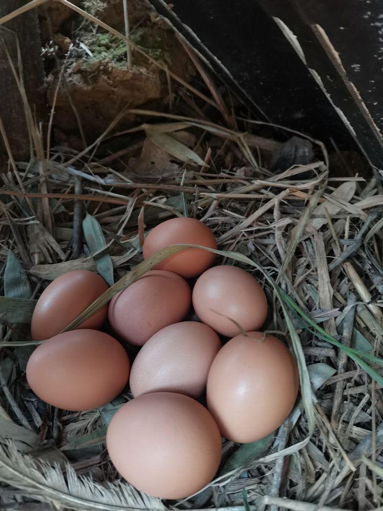 寻味贵州 | 贫困大学生养殖土鸡 打造大山深处的绿色生态美味