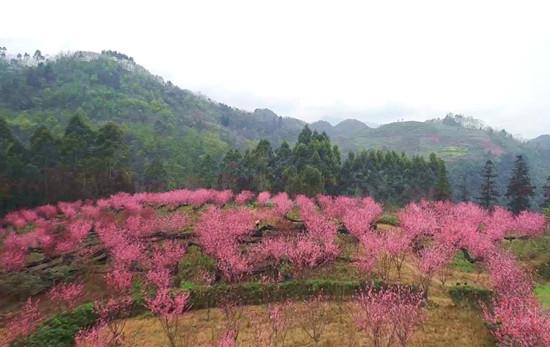 峨眉山南十里桃花,乐山这个小村的春天美翻了 旅游 第3张