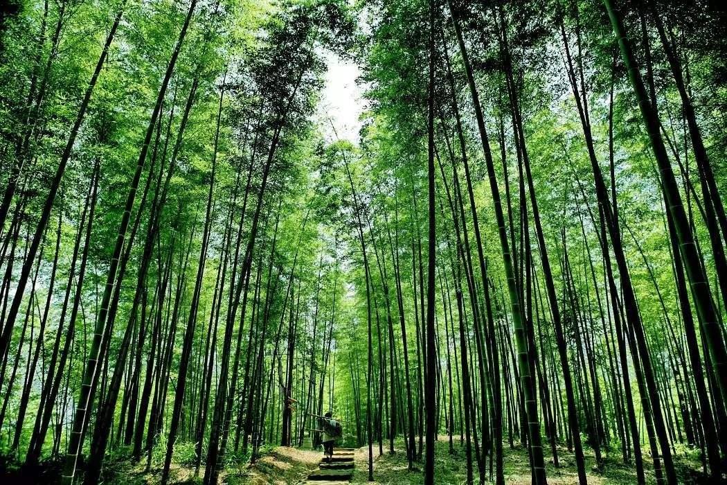 【综合】贵州春天的七种颜色 旅游 第3张