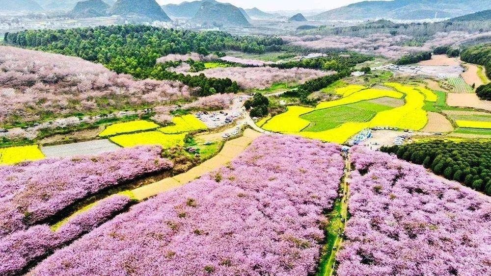 【综合】贵州春天的七种颜色 旅游 第2张