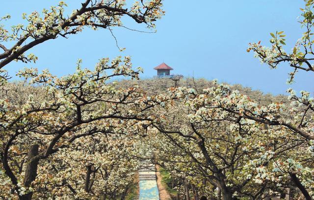 【综合】贵州春天的七种颜色 旅游 第4张