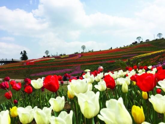 【综合】贵州春天的七种颜色 旅游 第7张