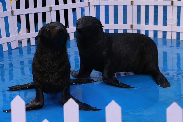 中秋国庆双节将至 贵州极地海洋世界海狮宝贝邀你来一起耍! 旅游 第2张